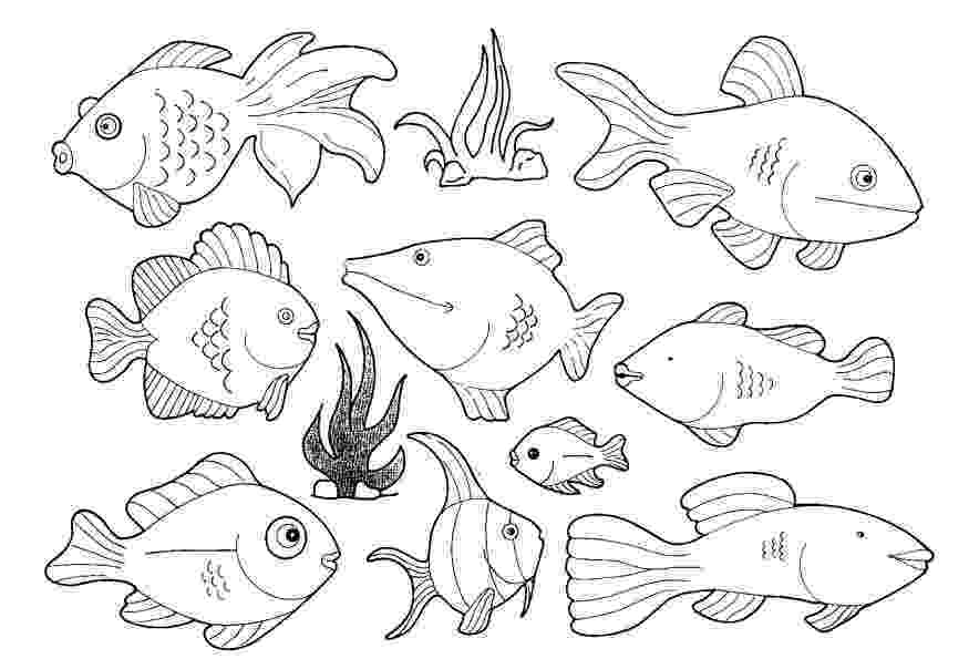 fish picture to color pictures to colour fish to color picture fish