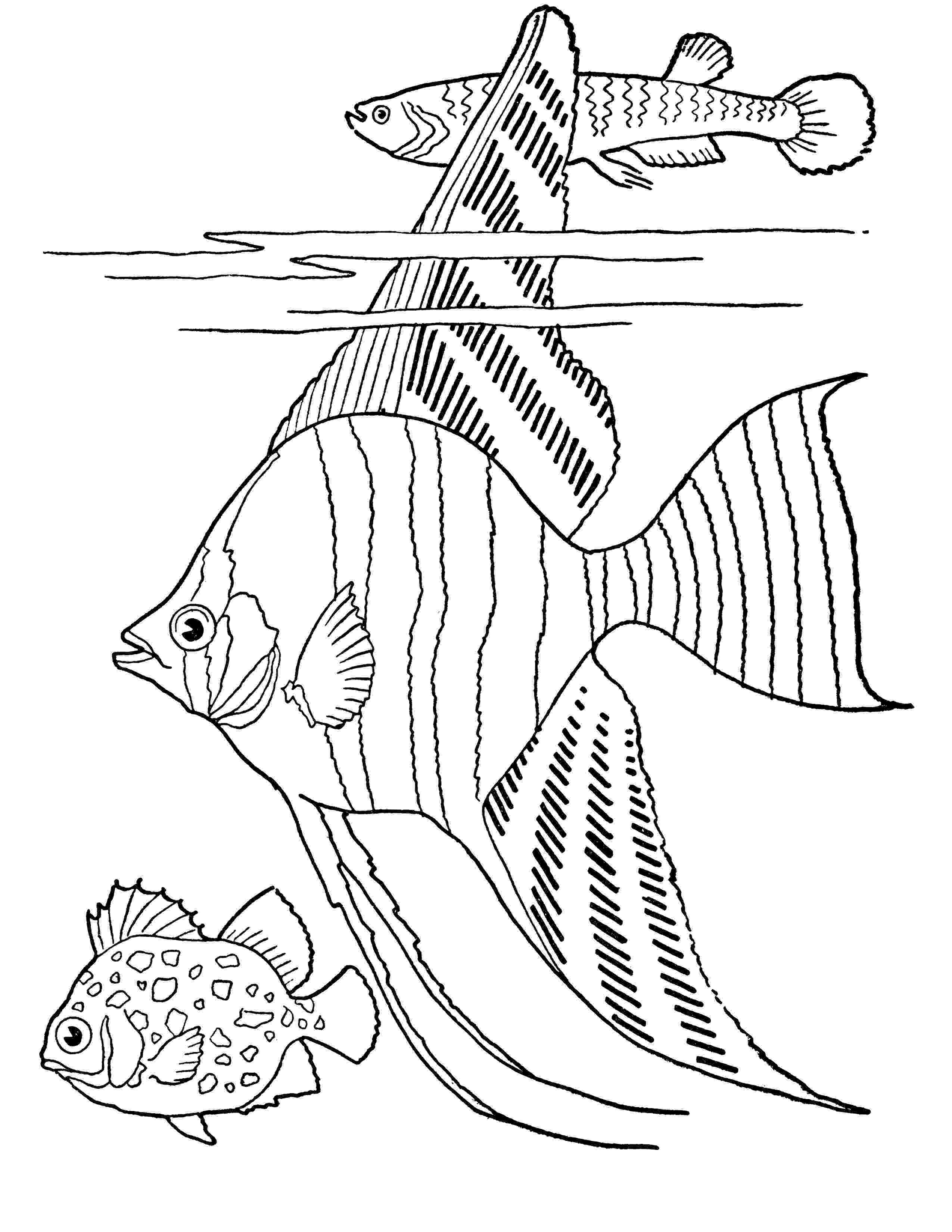 fishing coloring pages printable fish coloring pages getcoloringpagescom fishing printable coloring pages