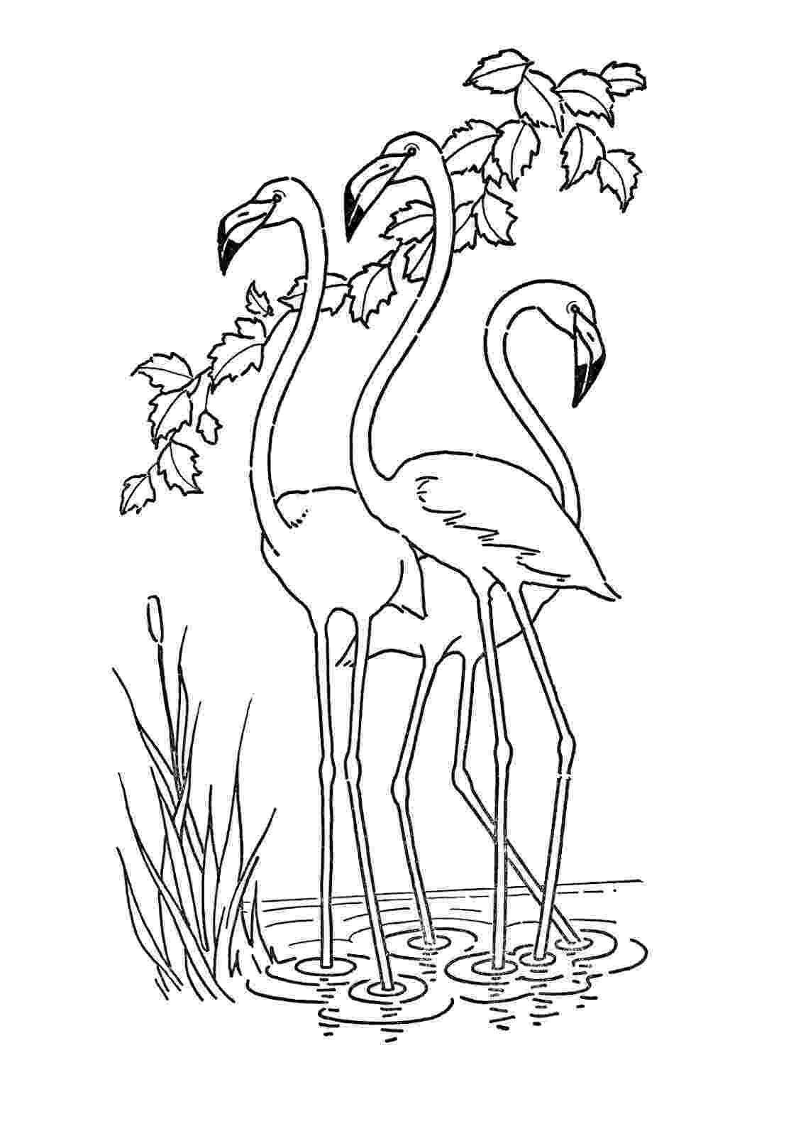 flamingo coloring sheet flamingo coloring page free printable coloring video flamingo coloring sheet
