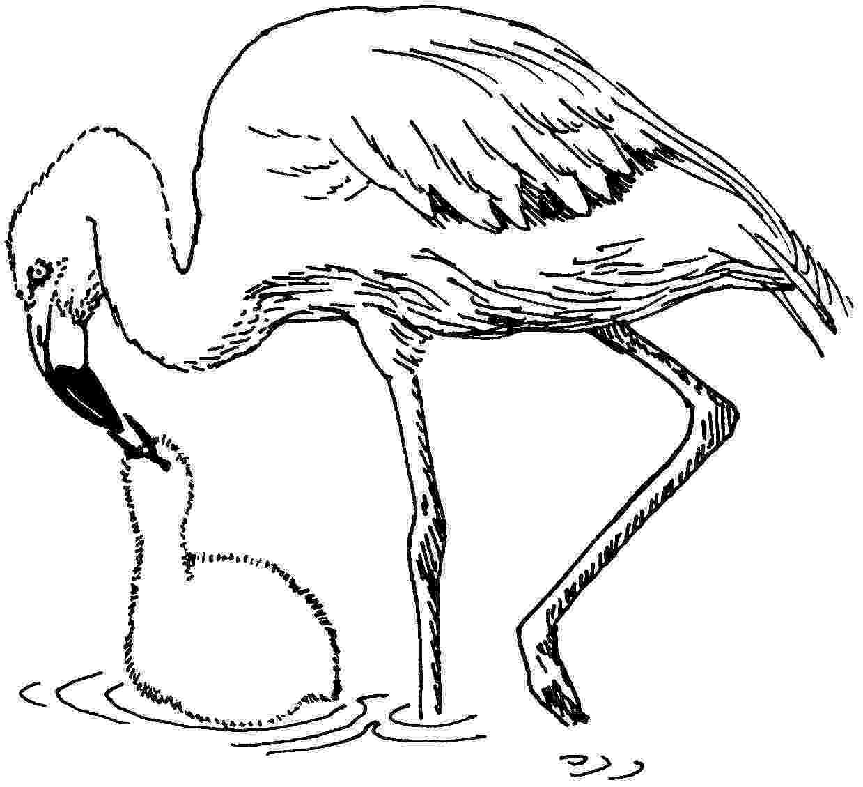 flamingo coloring sheet flamingo coloring pages to download and print for free flamingo coloring sheet