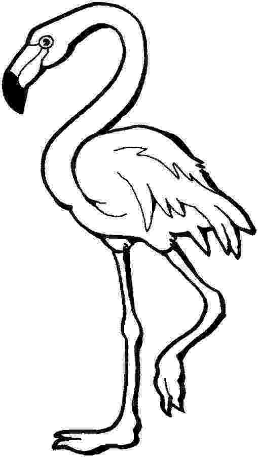 flamingo coloring sheet flamingo coloring pages to download and print for free sheet flamingo coloring
