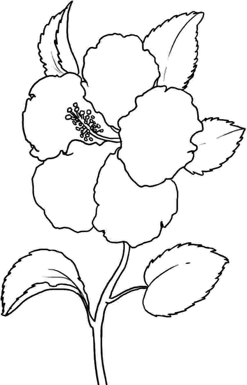 flower printables free printable hibiscus coloring pages for kids printables flower 1 1