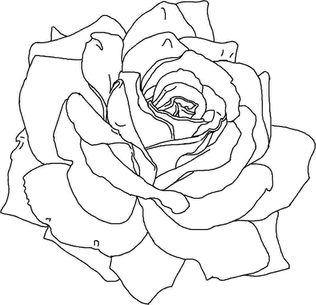 flowers to print and colour flowers to colour colour and to print flowers