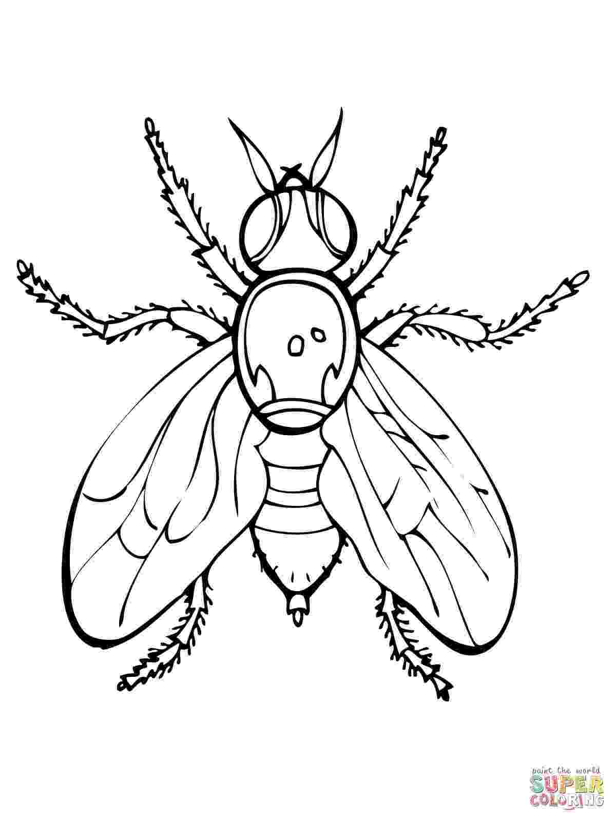 fly printable flies free coloring pages fly printable