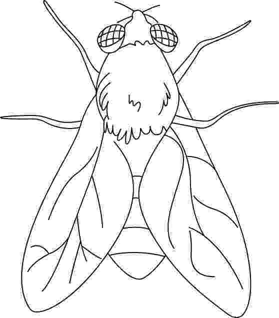 fly printable fly coloring page animals town animal color sheets fly fly printable