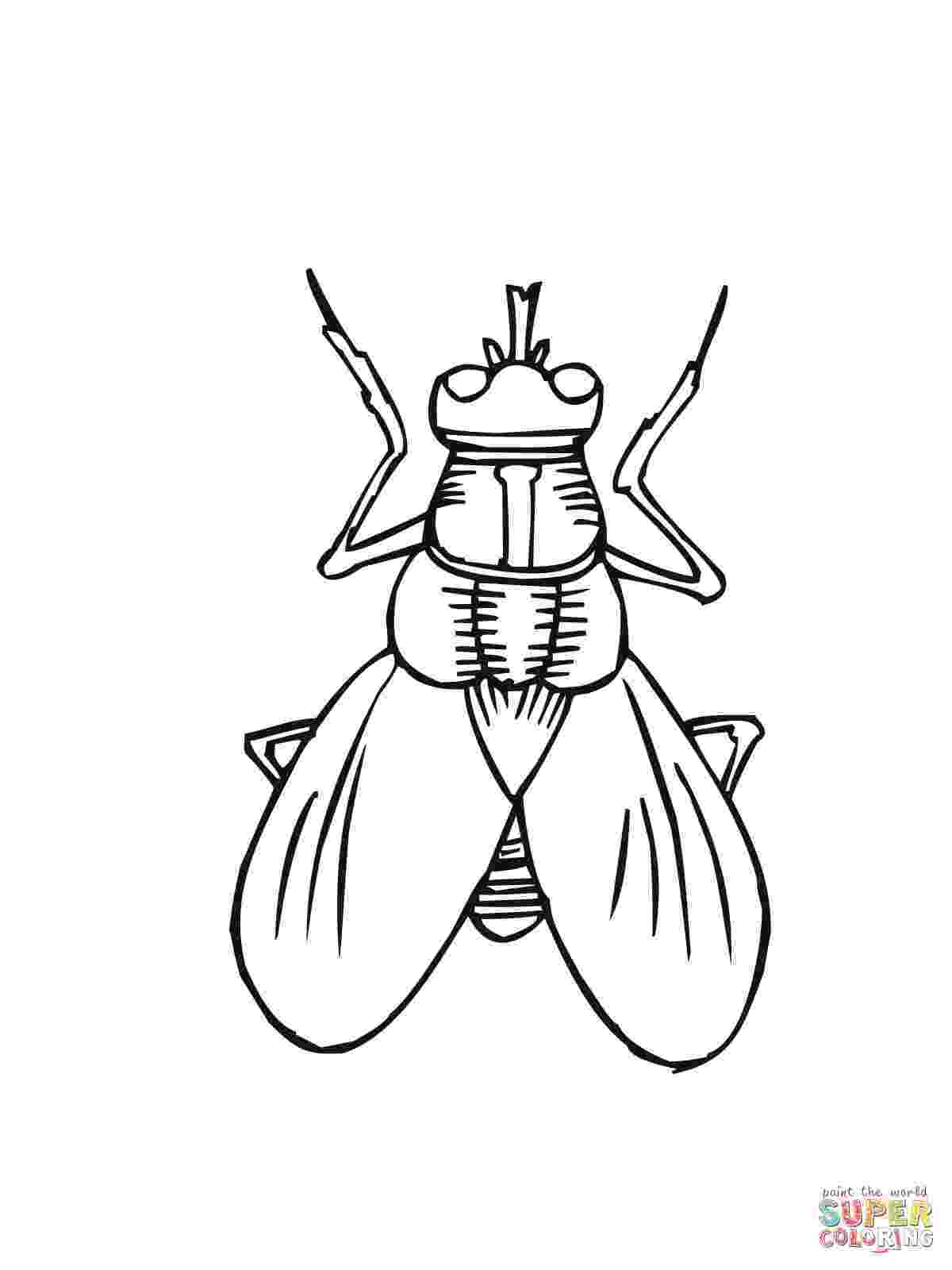 fly printable fly printable coloring pages print coloring 2019 fly printable