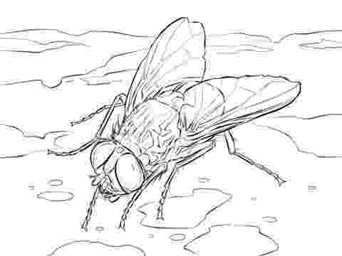 fly printable insect flies coloring pages print coloring fly printable