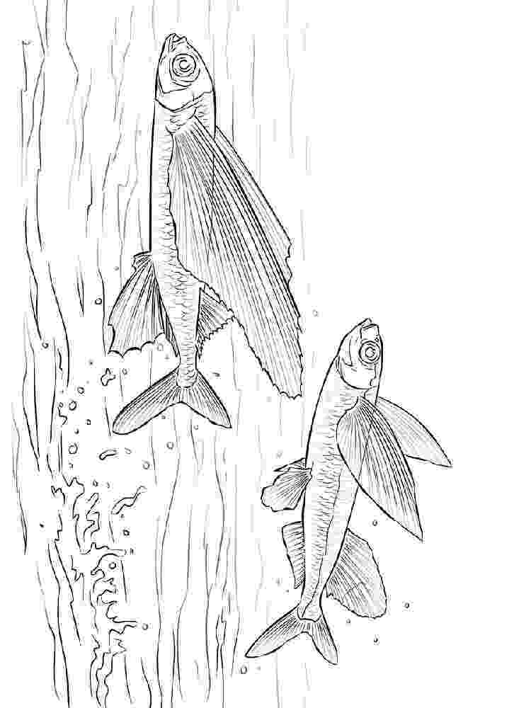 flying fish coloring page coloring flying fish picture fish flying coloring page