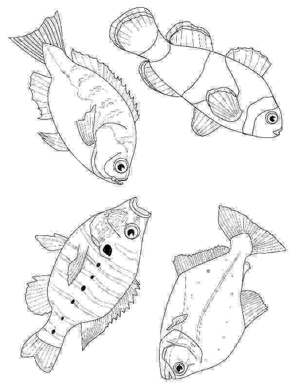 flying fish coloring page flying fish coloring page coloringcrewcom coloring flying page fish