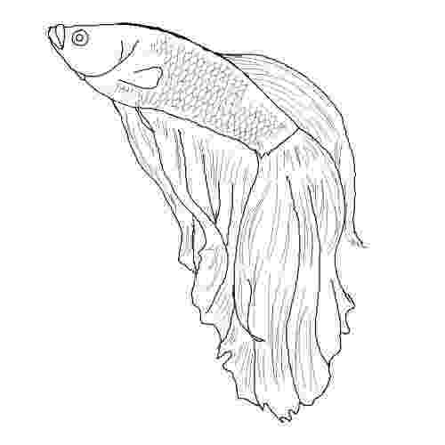 flying fish coloring page flying fish coloring pages download and print flying fish coloring fish page flying