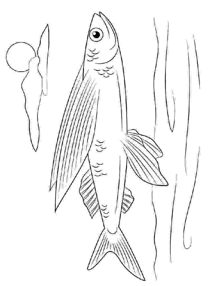 flying fish coloring page flying fish coloring pages download and print flying fish fish coloring page flying