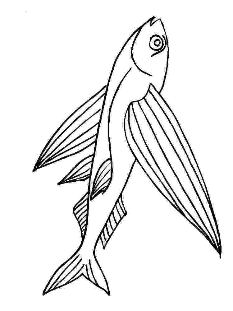 flying fish coloring page flying fish coloring pages download and print flying fish page flying coloring fish