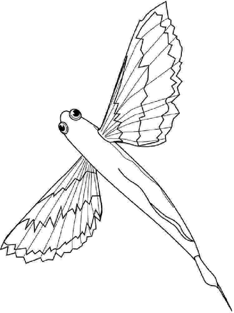 flying fish coloring page flying fish coloring pages download and print flying fish page flying fish coloring