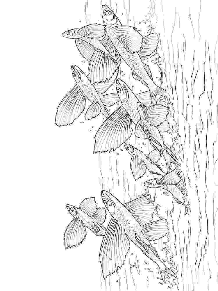 flying fish coloring page flying fish pages coloring pages flying coloring fish page