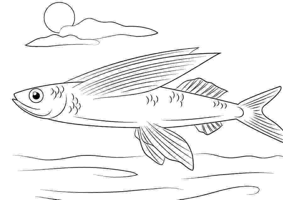 flying fish coloring page kids page flying fish animals town color sheet coloring fish page flying coloring