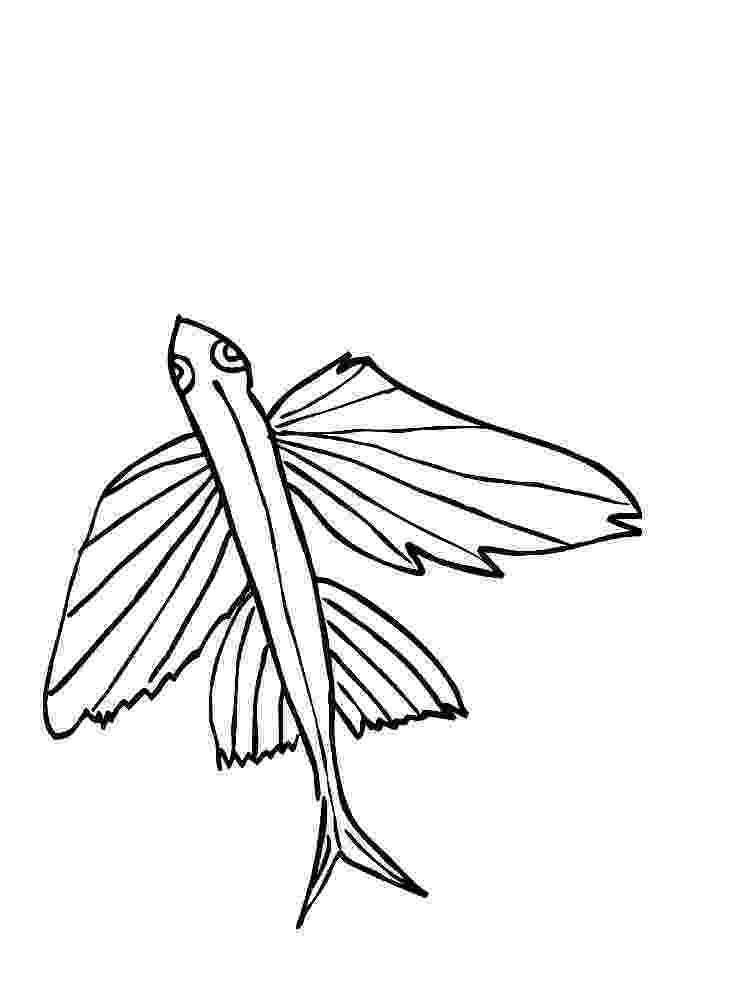 flying fish coloring page sailfin flying fish and common atlantic flying fish page flying coloring fish