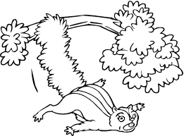 flying squirrel coloring page ausmalbild flughörnchen ausmalbilder kostenlos zum flying squirrel coloring page