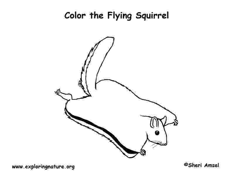 flying squirrel coloring page flying squirrel coloring pages download and print for free flying page coloring squirrel