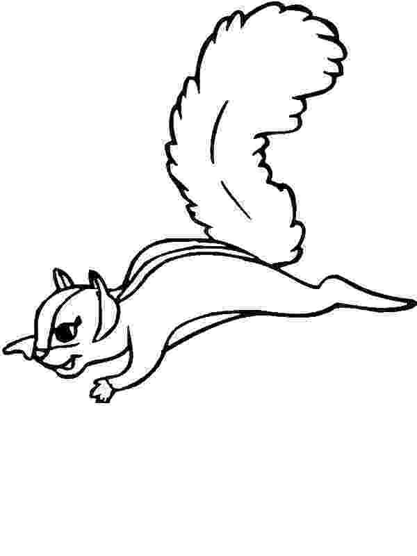 flying squirrel coloring page free coloring page small animals of north america coloring squirrel page flying