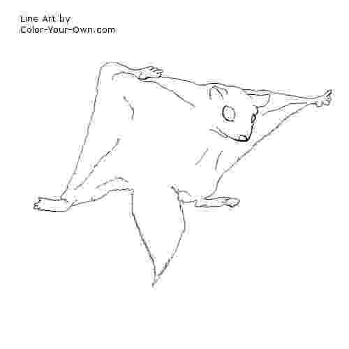 flying squirrel coloring page la chachipedia ardillas para colorear page coloring flying squirrel