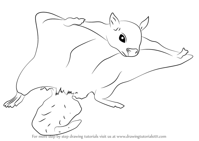 flying squirrel coloring page northern flying squirrel coloring page coloring pages page coloring squirrel flying