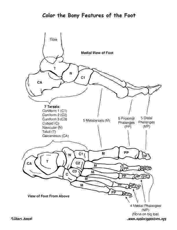 foot coloring page bones of the foot coloring coloring foot page