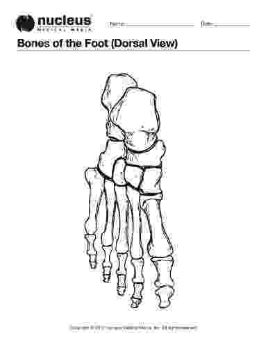 foot coloring page this anatomy coloring book page depicts the bones of the page foot coloring