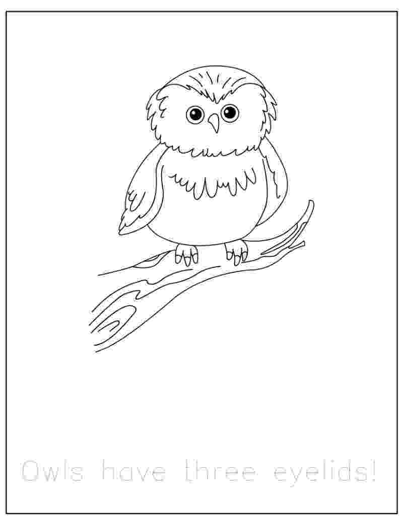 forest animal coloring pages deciduous forest with animals coloring page animal pages coloring forest