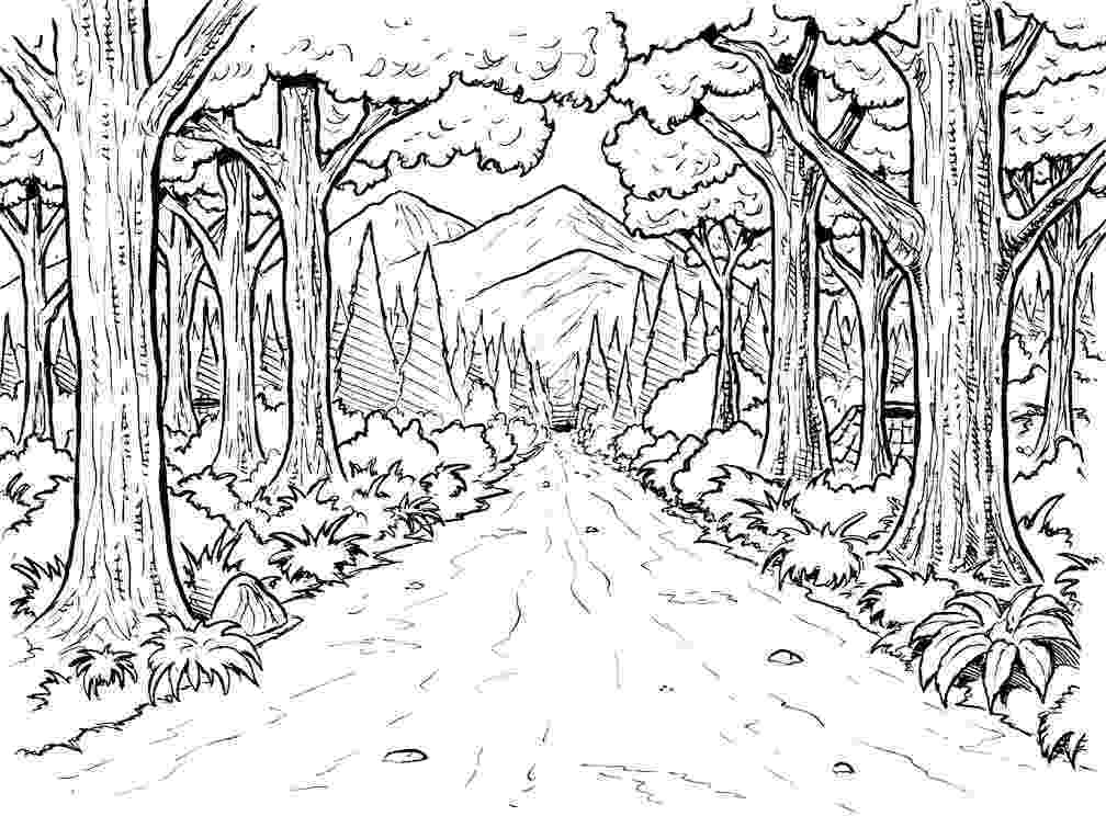 forest animal coloring pages forest animals coloring page forest pages coloring animal