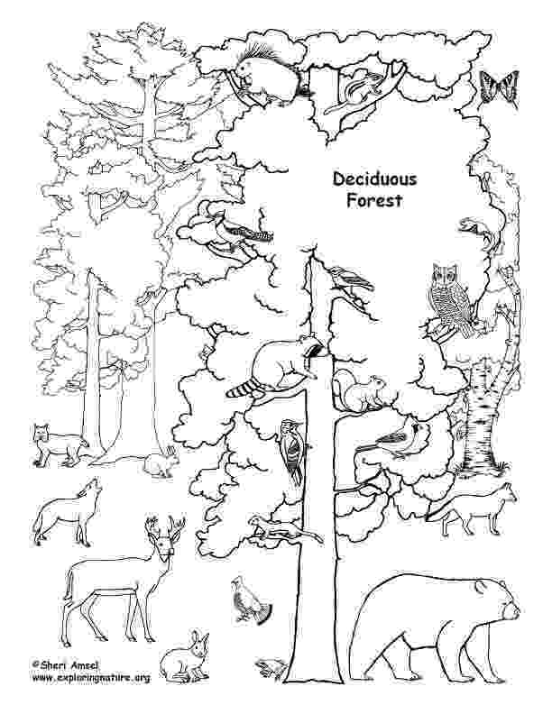 forest animal coloring pages the daily art of lemurkat colouring pages forest coloring animal pages