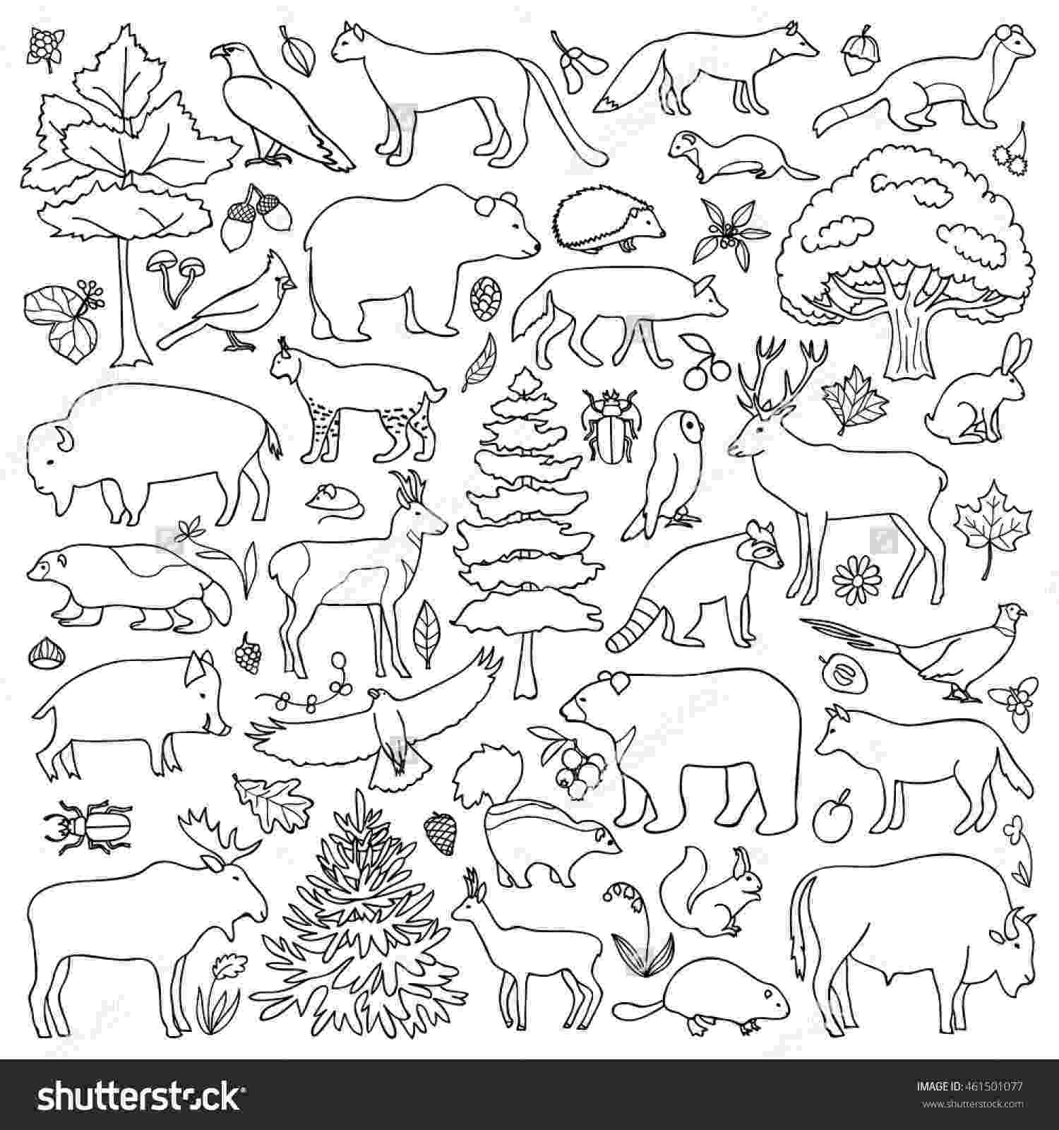 forest animals coloring pages forest coloring pages at getcoloringscom free printable coloring forest pages animals
