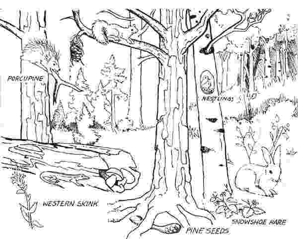 forest animals coloring pages forest where animals live coloring page coloring sky pages forest coloring animals