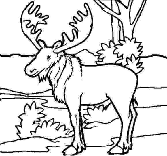 forest animals coloring pages forestanimalscoloringpages moose free animal coloring forest animals coloring pages