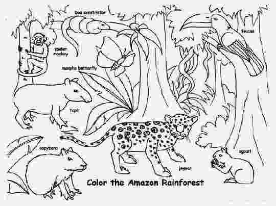 forest animals coloring pages rainforest animal coloring pages getcoloringpagescom forest coloring pages animals