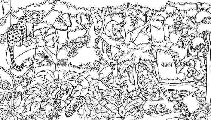 forest pictures to color rainforest coloring pages to download and print for free to forest color pictures