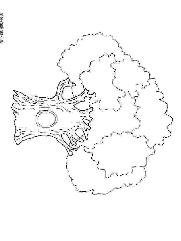 free coloring pages le tree free printable tree coloring pages for kids cool2bkids free tree coloring pages le