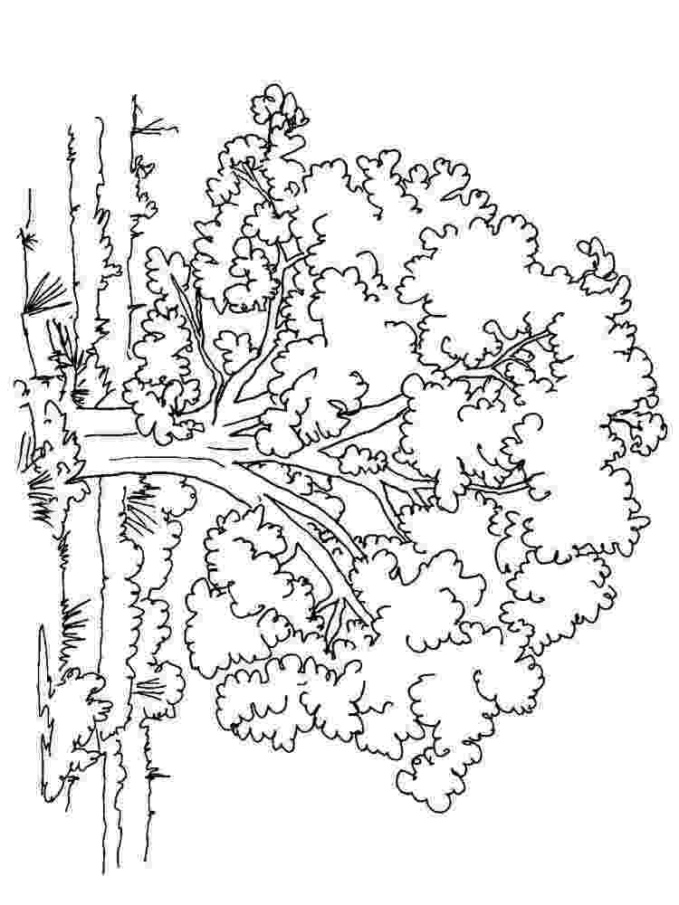 free coloring pages le tree free printable tree coloring pages for kids cool2bkids tree le pages free coloring