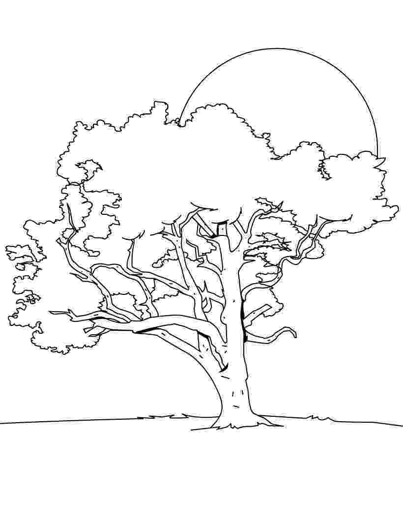 free coloring pages le tree free printable tree coloring pages for kids le free pages tree coloring