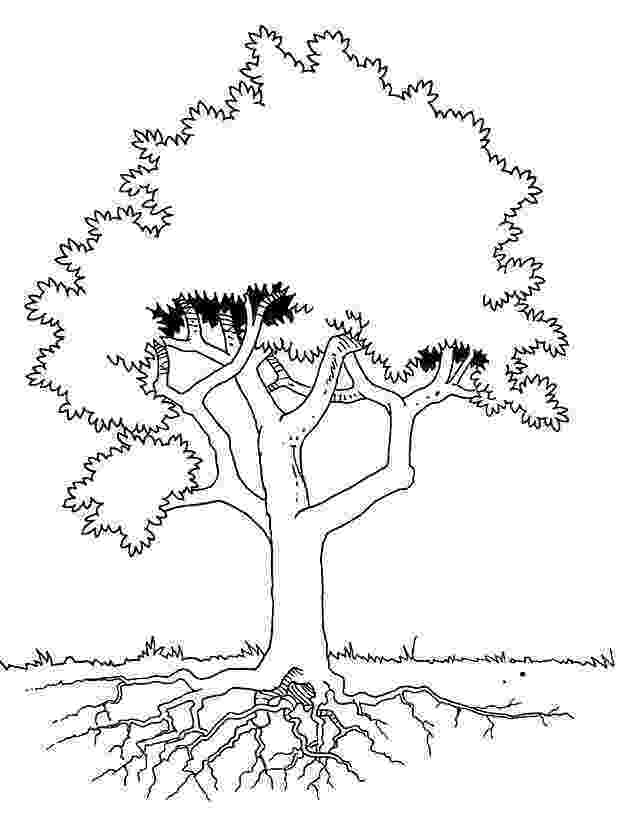 free coloring pages le tree free printable tree coloring pages for kids pages tree le coloring free