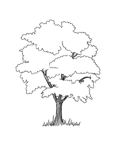 free coloring pages le tree the tree is seen in detail coloring pages stuff tree coloring tree pages free le