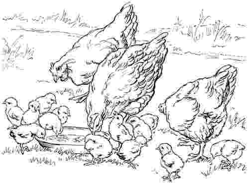 free coloring pages of baby farm animals mais animais da fazenda desenhos para colorir baby coloring pages of farm free animals
