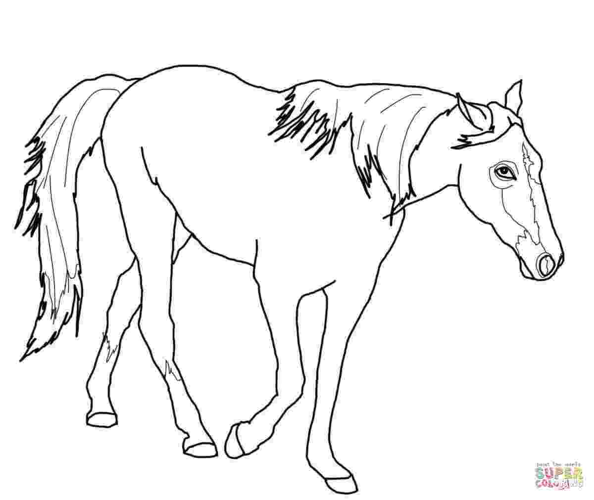 free coloring pictures of horses free printable horse coloring pages for kids horse horses of coloring free pictures