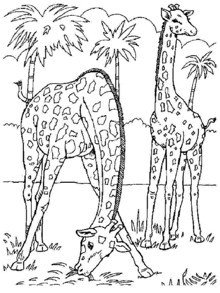 free colouring pages wild animals wild animal coloring pages best coloring pages for kids wild free animals colouring pages