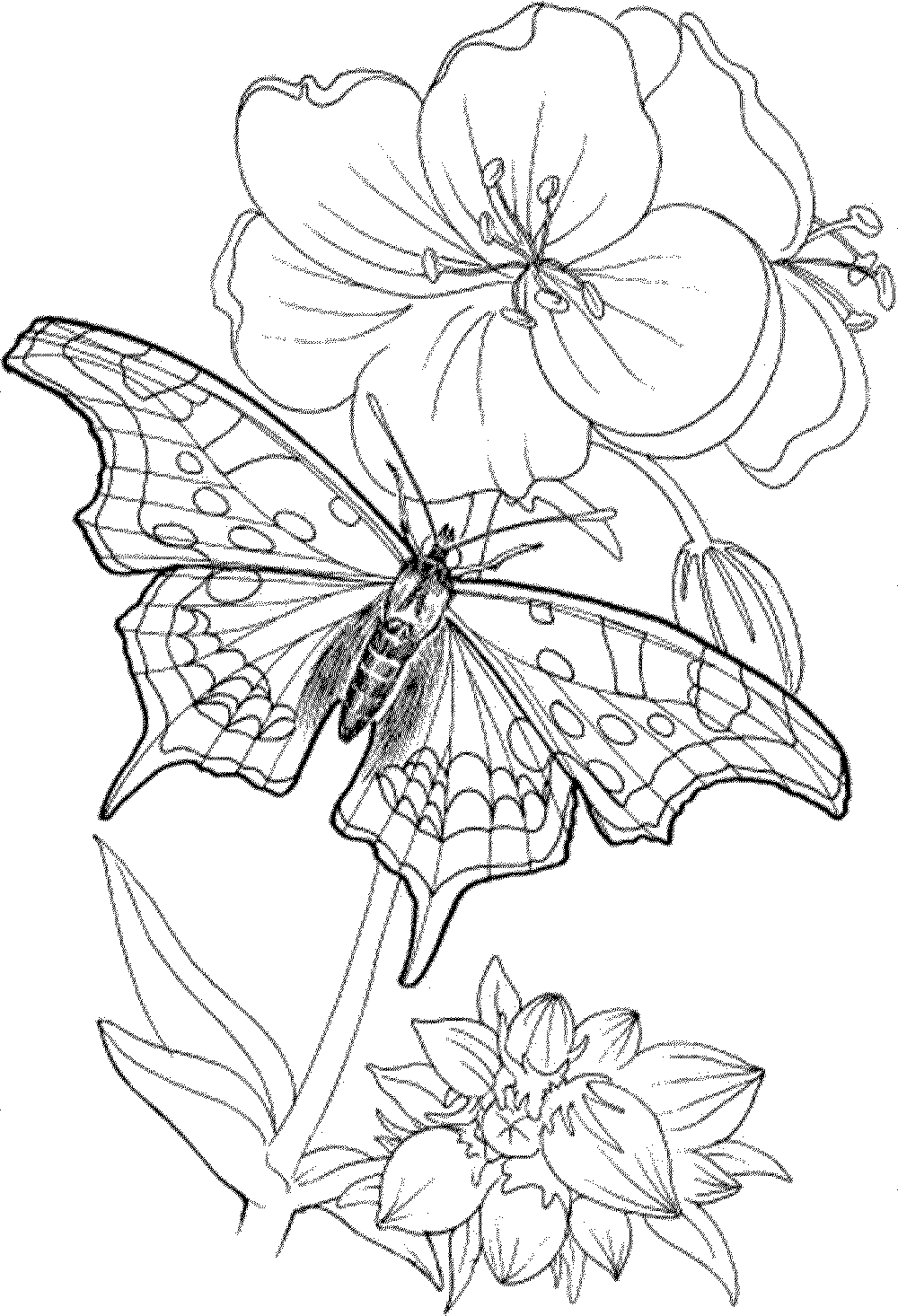 free detailed coloring pages free printable coloring pages adults only coloring home pages free detailed coloring