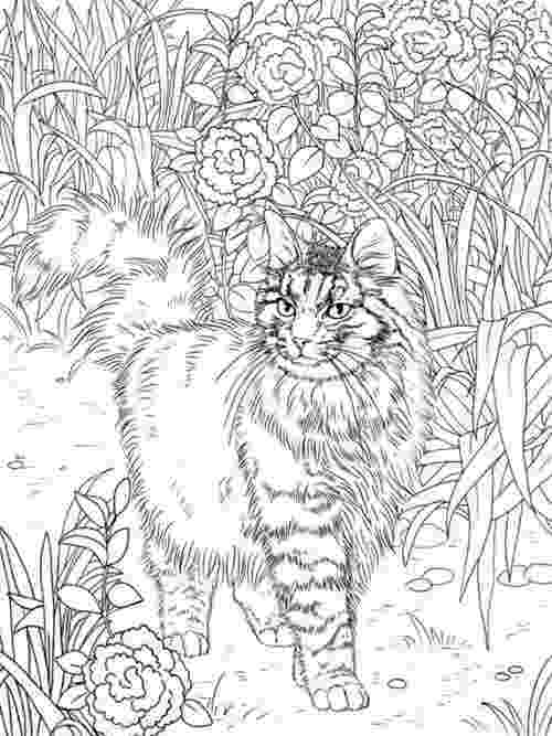 free online coloring pages for adults cats best coloring books for cat lovers cleverpedia free cats adults pages online for coloring