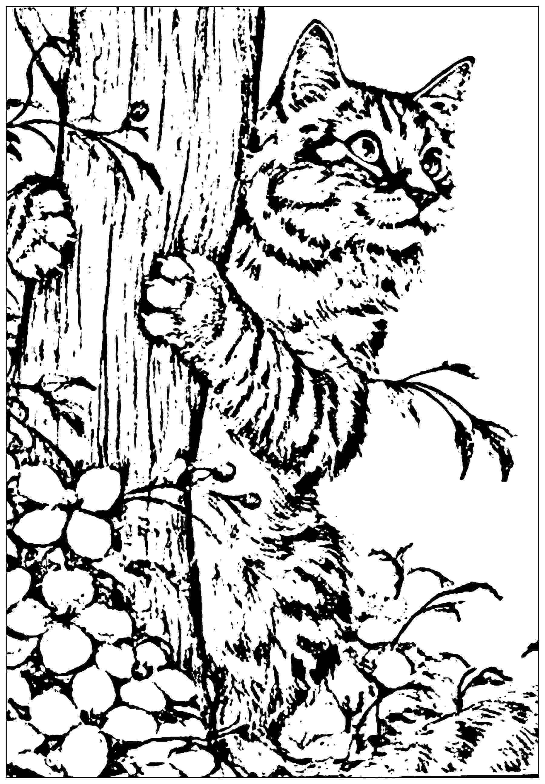 free online coloring pages for adults cats cats to print cats kids coloring pages free cats for online adults pages coloring