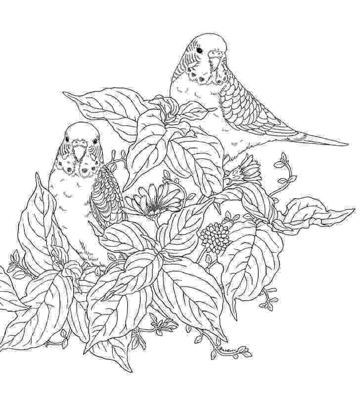 free printable coloring pages for adults nature best adult coloring pages to print featuring country free printable pages for coloring nature adults