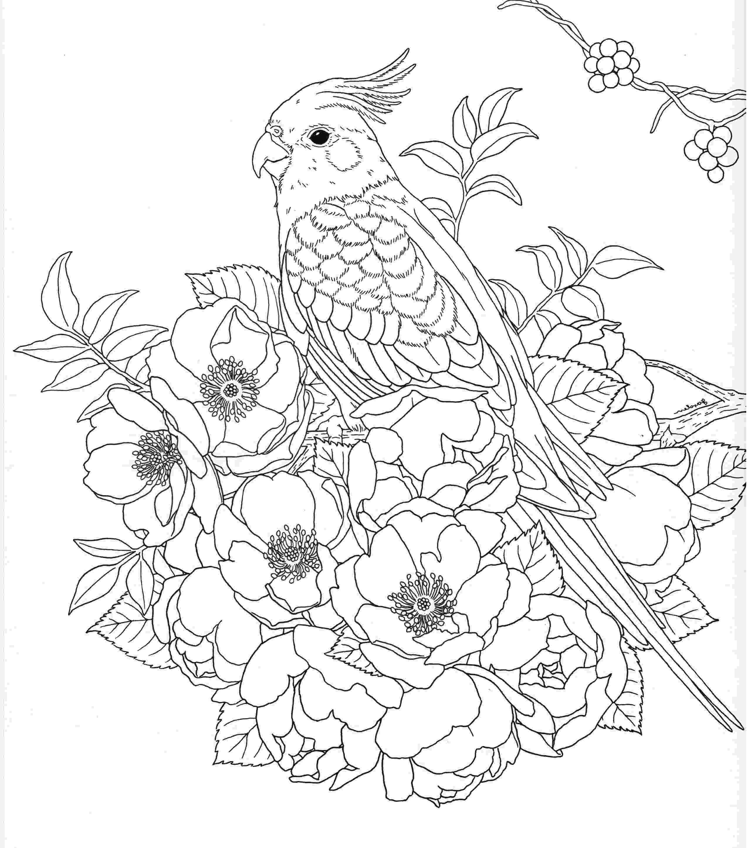 free printable coloring pages for adults nature harmony of nature adult coloring book pg 26 coloring printable free pages for adults nature coloring
