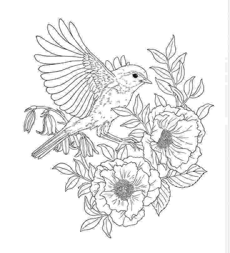free printable coloring pages for adults nature printable nature coloring pages for kids cool2bkids free coloring nature printable pages for adults