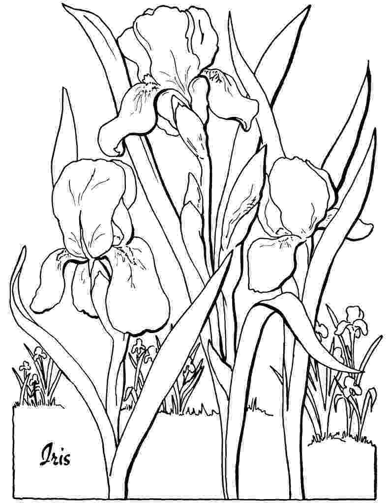 free printable flower coloring pages for adults 10 floral adult coloring pages the graphics fairy printable flower pages free coloring for adults